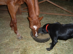 Catherine Ki.'s Thoroughbred Horse & Dog Love Natural Plan Stomach Soother