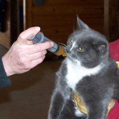 Cats' hairballs can be helped with Natural Plan Stomach Soother